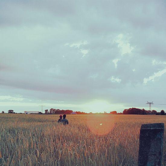 Watching The Sunrise Romantic Corn Field