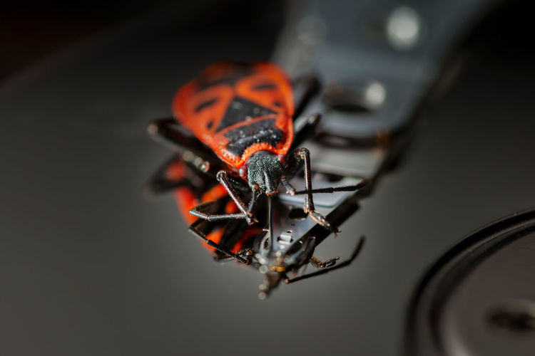 High angle view of beetle on hard drive