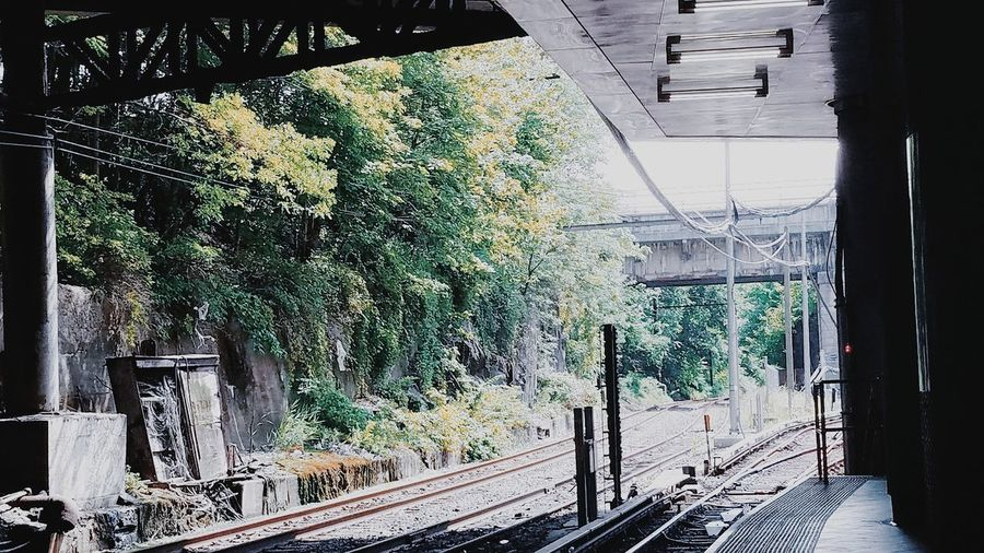 Tree No People Day Outdoors Growth Built Structure Nature Architecture Journalsquare Jersey City Commuting Trainstation Pathstation Beautiful Nature Traintracks