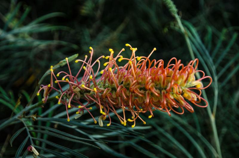 Contrast Plant