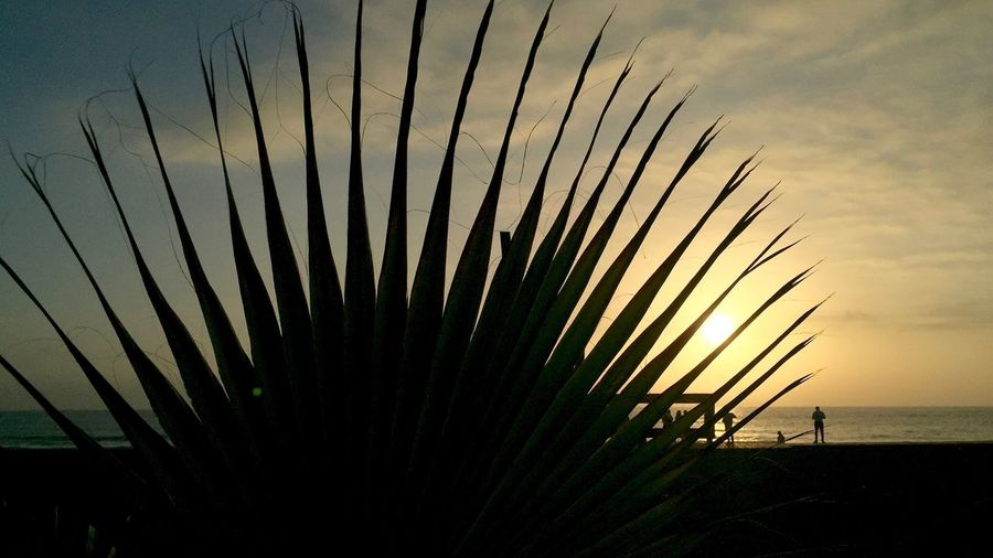 Silhouette plant at beach against sky during sunset