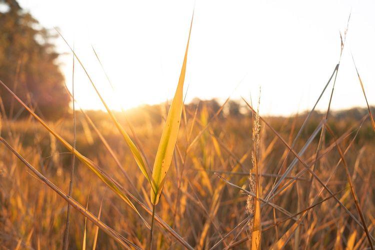 Plant Field Sky