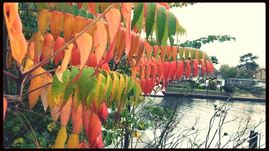 Riverthames Autumn Leaves Autumn Colors Photography