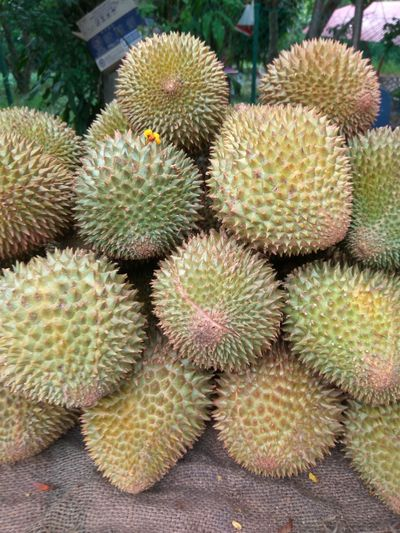 Durian king of fruit Thorn Spiked Growth Nature Plant No People Close-up Food Durian Fruit Durians Shop Durian Season Durian Fiesta Durian Farm Fruit Asian  Malaysia Truly Asia Foodphotography Fresh Delicous Heaven Tasteful MusangKing