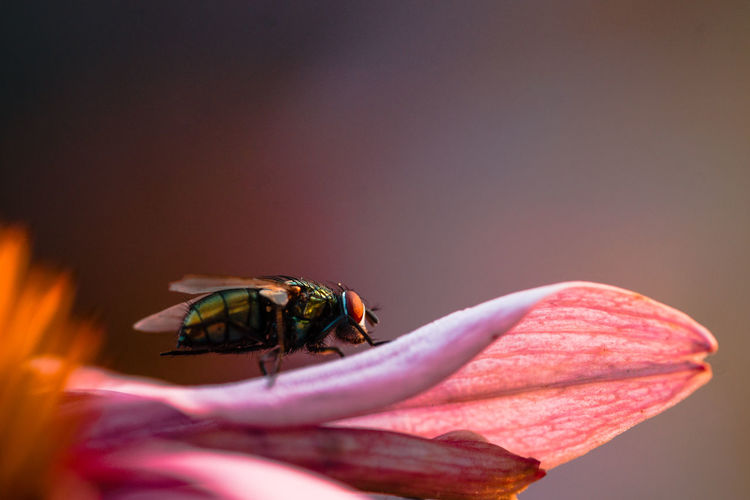 Animal Animal Themes Animal Wildlife Animals In The Wild Beauty In Nature Close-up Copy Space Flower Flower Head Flowering Plant Fragility Insect Invertebrate Nature No People One Animal Outdoors Petal Pink Color Selective Focus Vulnerability