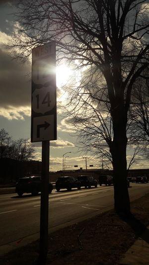 Tree Road Sign Sky