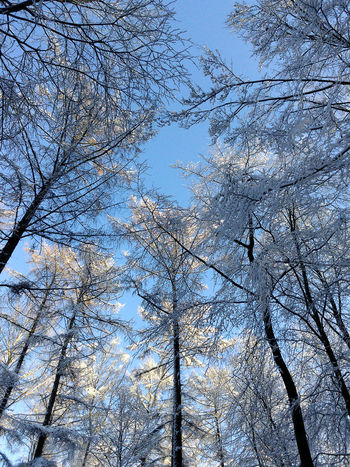 Ready for the winter... Blue Sky Forest Forêt De Soignes In The Forest Snow Sonian Forest Tree Winter Background Mobilephotography Branches No People Lookingup It's Cold Outside Patterns In Nature Clear Sky Mobile Photography Smartphonephotography XPERIA Here Belongs To Me Blue Wave