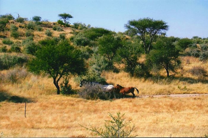 Sun Trees Colors Wildlife Africa Savannah