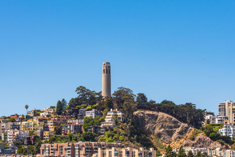 Coit Tower Architecture Built Structure Building Exterior Clear Sky Sky Building Blue Nature City History Tree The Past Copy Space No People Residential District Day Factory Plant Tower Outdoors Cityscape