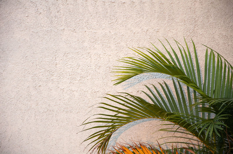 Palm tree against wall