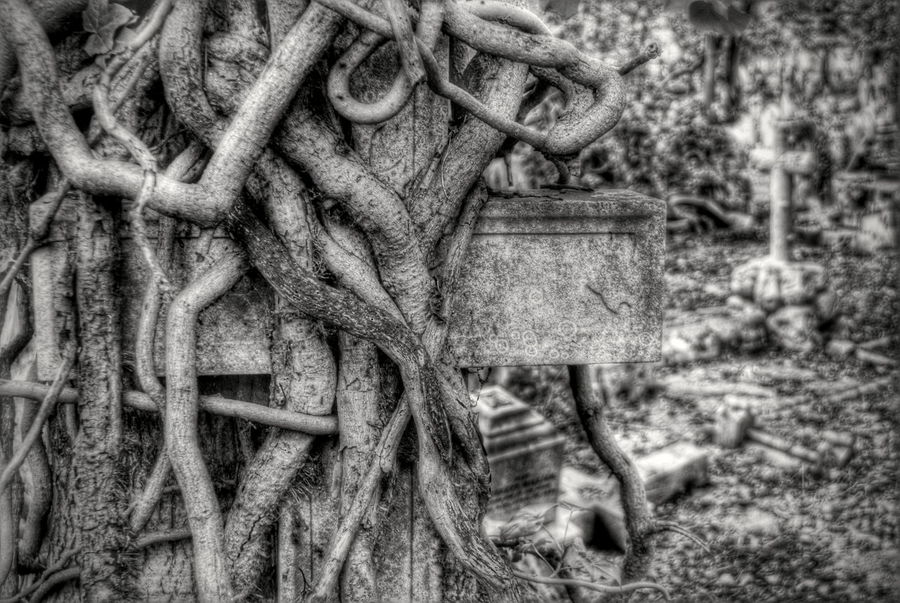 Tangled Roots Of Tree Roots Tombstone Highgate Cemetery Graveyard Beauty Black And White Knotty Wood Root Of A Tree Rootart TwistedWood Twisted Branches Twisted Vines Time Passes By Forgotten Perspectives On Nature