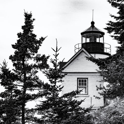 Black and White shot of Bass Harbor Lighthouse in Maine on a cloudy day Bass Harbor Lighthouse Lighthouse Maine Architecture Black And White Building Building Exterior Built Structure Day Growth Low Angle View Nature No People Outdoors Plant Roof Sky Tree
