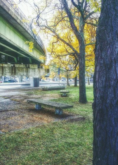 Sitting Area Benches Park Downtown Walking Around The City  Highwayscape Fall Beauty Autumn Leaves Beauty Of Autumn Enjoying Life