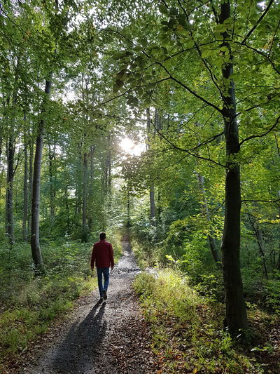 A beautyfull day Tree Nature Forest Beauty In Nature Walking Growth Day Real People Outdoors Hiking Full Length Landscape Men Scenics One Person Grass People Adult Shadows & Lights Shadows And Sunlight Shadow Forest Photography Forestwalk Forest Path Forest Trees