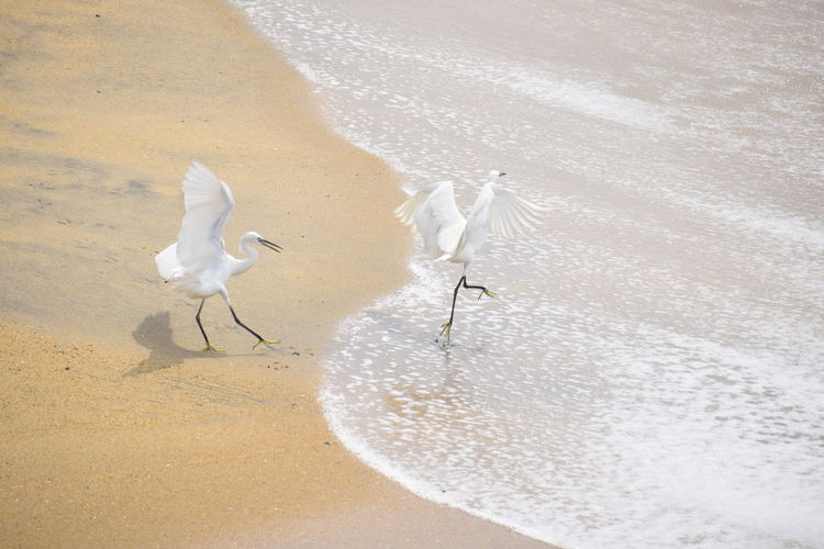 Nikonphotography NIKON D5300 White Color Animal Themes Water Land Nature No People Bird Day Beach Sand High Angle View Outdoors Beauty In Nature Sea