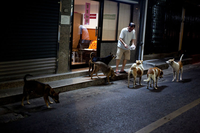 Dinner Time Animal Themes Building Exterior Dog Mammal Nightlife One Person Pets Road Sidewalk Spotted In Thailand Street Streetphotography Telling Stories Differently EyeEm X ICP - Telling Stories Differently