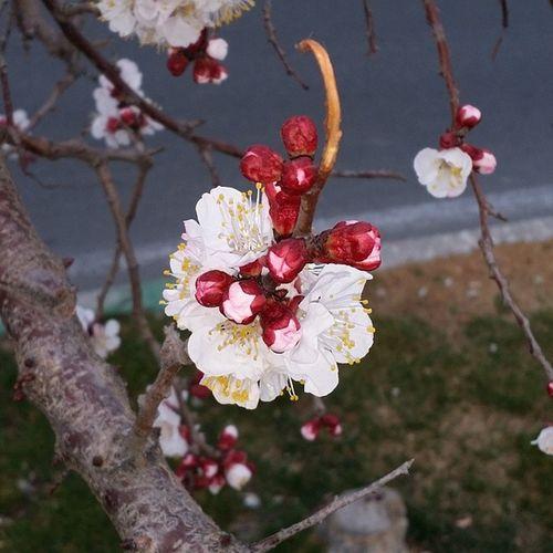 Irannegar Insiiran Spring Winter Flowers Iranlike
