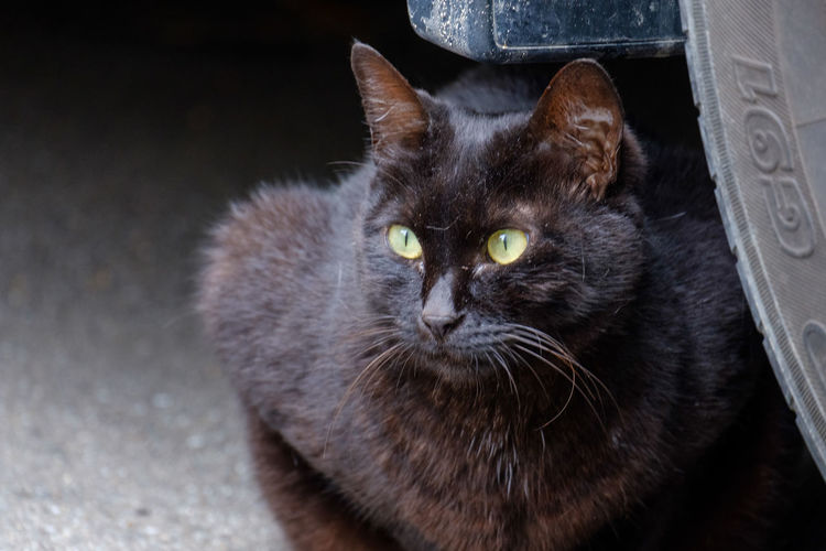 Japan Japan Photography Fujifilm Fujifilm_xseries X-t2 FUJIFILM X-T2 Cat Mammal One Animal Looking At Camera Portrait Whisker High Angle View No People Black Color Close-up Animal Eye Yellow Eyes Kitty Cat Black Cat