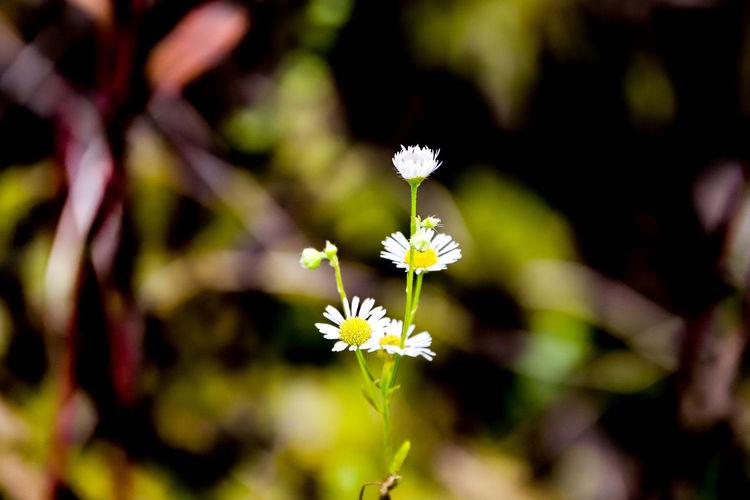 Kleine Blume im