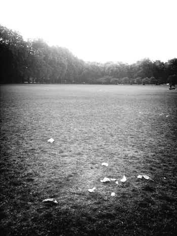 People leaving their shit in the grass after a picknick in the park. I'd say take the dna from that diaper and track these rats down 25 Days Of Summer in. Batterseapark