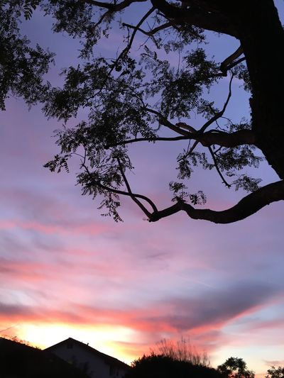 Tree Beauty In Nature Sunset Nature Silhouette Sky Low Angle View Scenics Outdoors Day Branch Tranquility No People