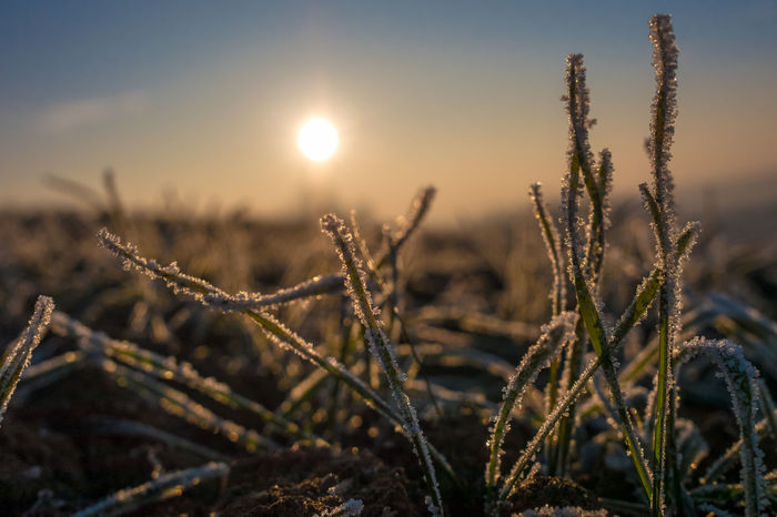 Beauty In Nature Frozen Grass Ice Low Angle View Nature New Life Outdoors Panasonic  Sunrise Weather