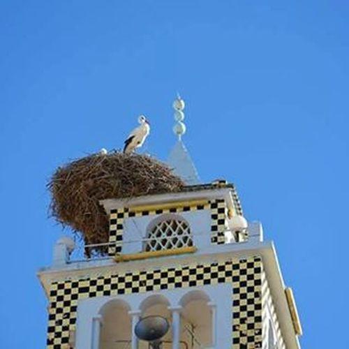 Stork Nest Mosque Minaret Peace Kalaatsenan Kef نهارنا زين و ربي يوفقنا بكل :) البلارج يقوللكم نهاركم تحفون :)