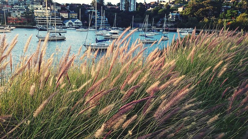 Tall Grasses Beach Sydney Australia
