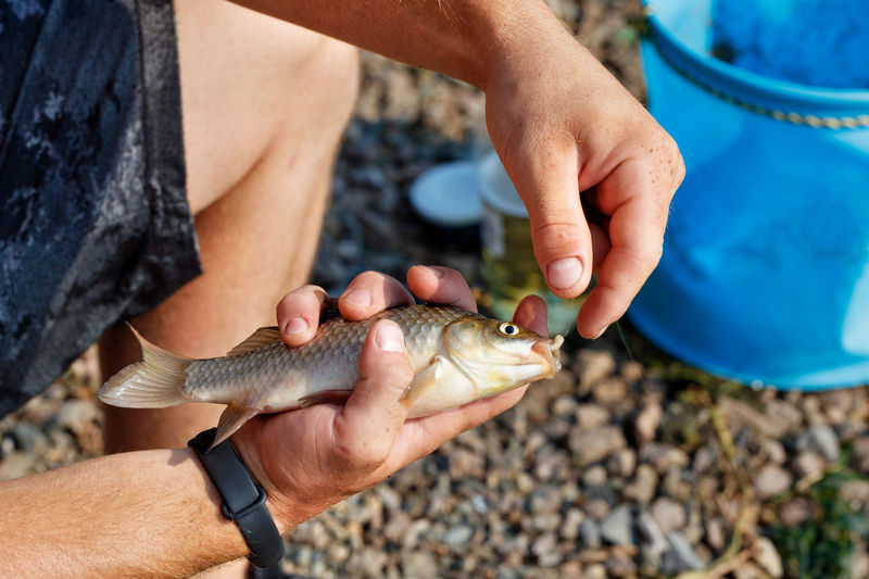 Male hands remove the caught crucian carp from the hook. blurred background of pebble beach.
