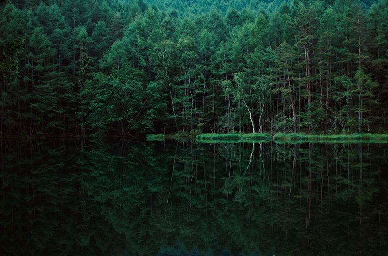 Reflection of trees in lake at forest