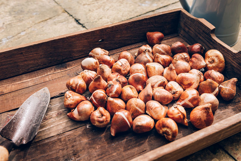 Tulip bulbs in wooden box, bulbs to be planted during autumn, home gardening as digital detox