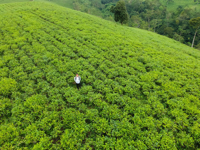 Me and tea plantation Golf Course Green - Golf Course Backgrounds Full Frame High Angle View Field Grass Green Color Greenery Green Vegetation Young Plant Relaxing Moments Botanical Countryside Grassland Grass Area