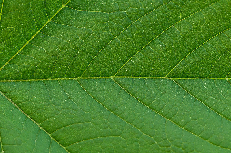 Leaf Copy Space Green Nature Plant Background Backgrounds Beauty In Nature Close-up Closeup Freshness Green Color Leaf Macro Natural Pattern Nature_collection Plant Plant Part Structure Texture Textured  EyeEmNewHere