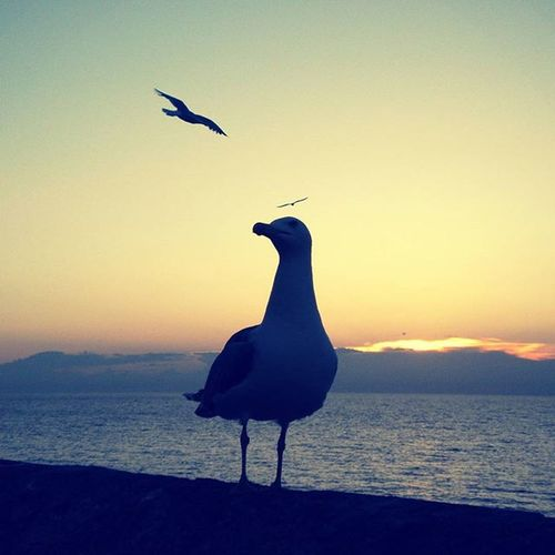 Sunrise_and_sunsets Skylovers Sunrise_and_silohuettes1 9vaga_numberthree9 Seagulls Italy Gallipoli Made In Puglia  Birds Sunset
