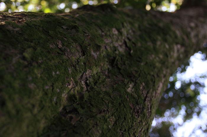 beautiful lichen on tree. Green Lichen Lichen Lichen Beauty Lichen Growth Lichen On A Tree Lichen Pattern Lichens Tree