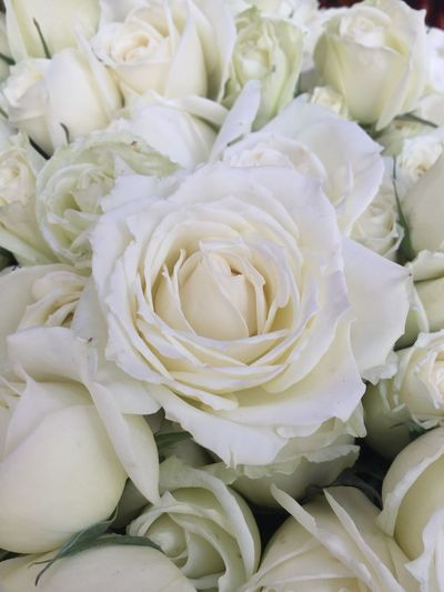 Full frame shot of white roses