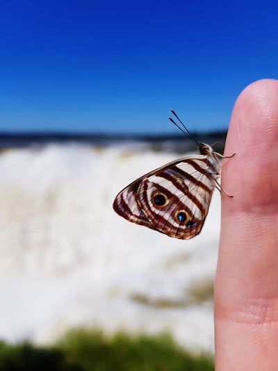 Close-up of butterfly on hand against waterfall