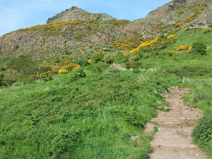 Looking up the Hiking Trail to the top of Arthur's Seat . Edinburgh Scotland May 2014. Urban Hiking Urban Green Hiking Adventures Day Hike Trecking United Kingdom Hill Green Landscape Summer Spring Travel Things To Do In Edinburgh Simple Pleasures Active Lifestyle  Daylight