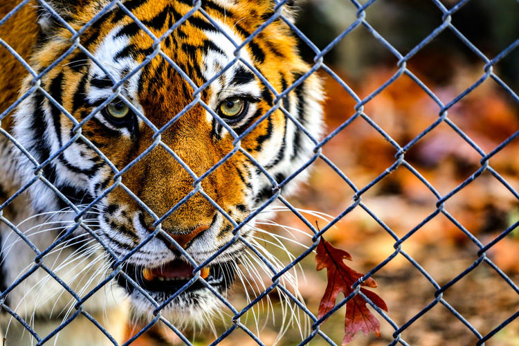 EyeEm Selects Pets Trapped Protection Cage Looking At Camera Metal Chainlink Fence Pattern Security Safety