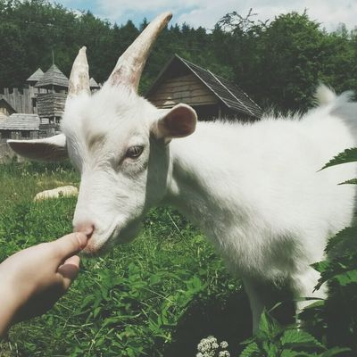 Koza Koza Taka Piękna Rajd Wioska Fantasy #1dzień