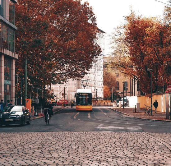 Cars on city street during autumn
