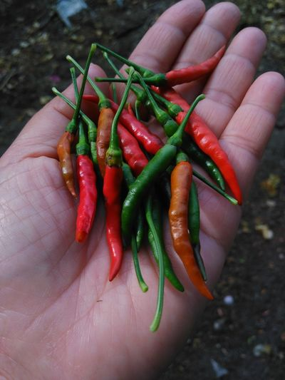 Close-Up Of Hand Holding Red Chili Peppers