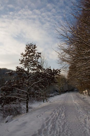 Snow ❄ Bare Tree Beauty In Nature Cold Temperature Day Landscape Nature No People Outdoors Road Scenics Sky Snow The Way Forward Tire Track Tranquil Scene Tranquility Tree Winter