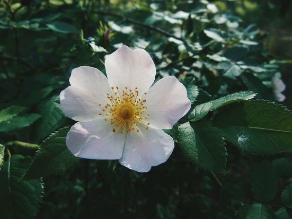 Vsconature Vscocam VSCO Flowers Vscoflowers