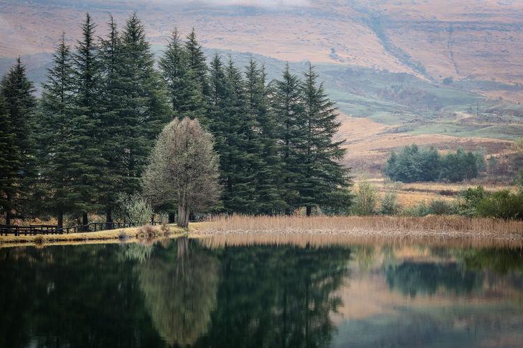 Tranquil fishing lake