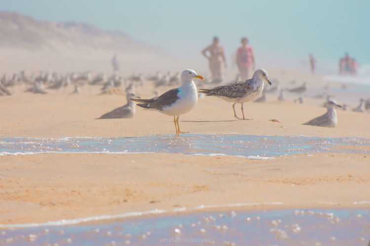 Seagulls on shore at sandy beach