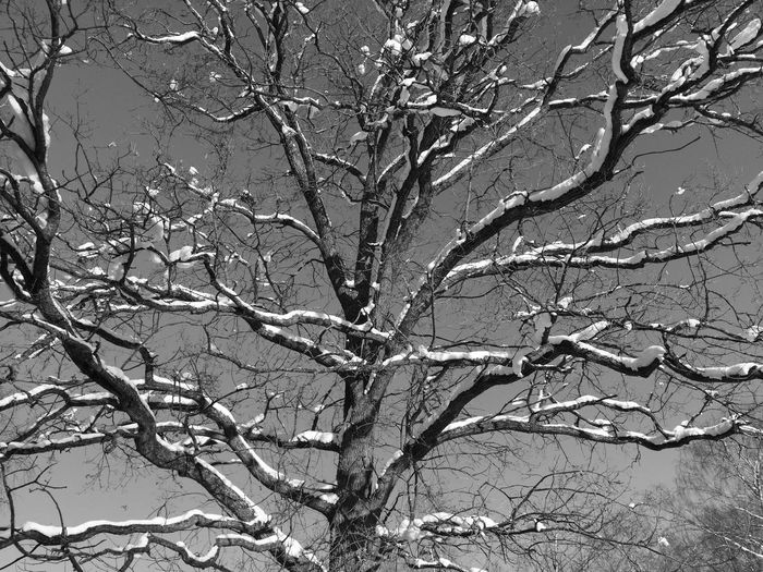 Low angle view of snow covered bare tree
