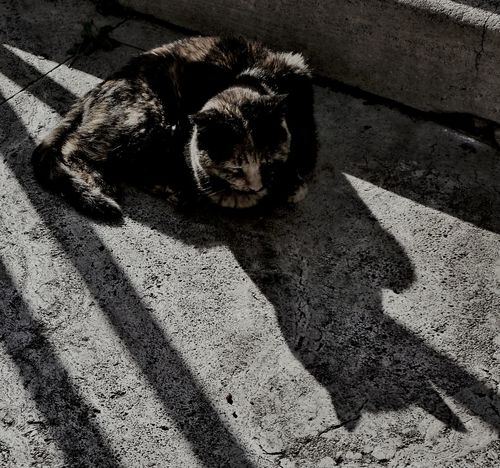 Cat Cats Of Rome and Batman with EyeEm GOTHAM filter.