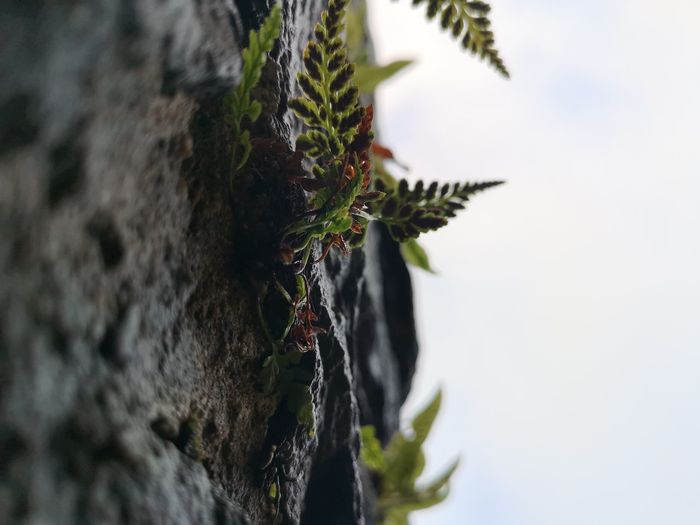 Nature finds away..... Look Up And Thrive Fern Wall Ferns Plant When Nature Takes Over Nature Nature_collection Plant Life Sky Close-up Plant Growing Tranquility Tranquil Scene Countryside Growth Young Plant