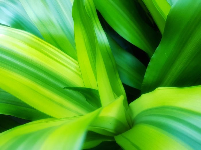 Green Color